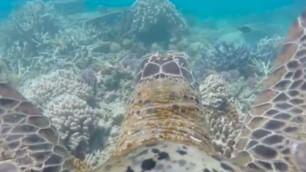 ''Aggrappati al guscio, bello'' Sul 'reef' con la tartaruga