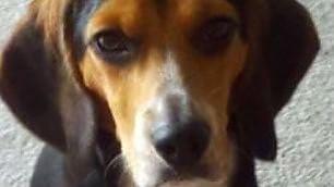 """""""Lei mi ha detto: o me o il cane"""" L'annuncio su Craiglist è virale"""