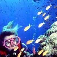 Unesco, la grande barriera corallina in Australia si salva dalla lista nera