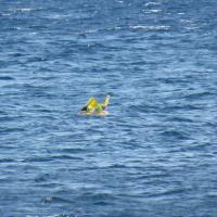 Turchia, bimba dimenticata sul gonfiabile: salvata a un chilometro dalla costa