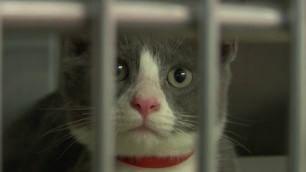 L'incubo del 4 luglio: 2 milioni di cani e gatti rischiano la vita