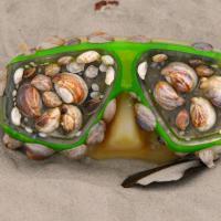Dai missili alle lapidi, ecco gli oggetti più bizzarri ritrovati sulle spiagge