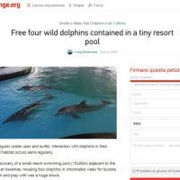 Delfini in vasca a rischio cecità: la denuncia del turista