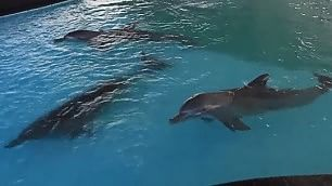 Delfini in vasca rischiano cecità La denuncia del turista