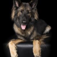 Prendetevi una pausa e respirate: i cani zen invitano alla calma interiore