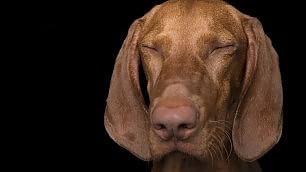 Lo Zen e l'arte di non abbaiare la calma interiore dei cani