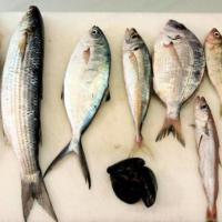 Caldo, contro l'insonnia 'No' a pesce azzurro a cena