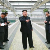L'allevatore di tartarughe è 'incompetente': Kim Jong-un ordina l'esecuzione