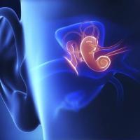 """""""La sordità genetica potrebbe essere trattata con un virus"""""""