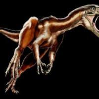 Il più grande dinosauro 'volatile' era in Cina 125 milioni di anni fa