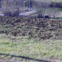 Cnr: perdiamo 6-7 metri quadrati di suolo al secondo