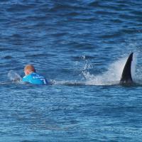 Sudafrica, squalo attacca surfista: la fotosequenza