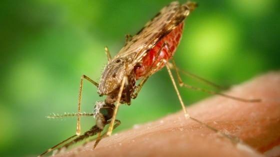 Le strategie di attacco delle zanzare. E il mistero delle loro scelte