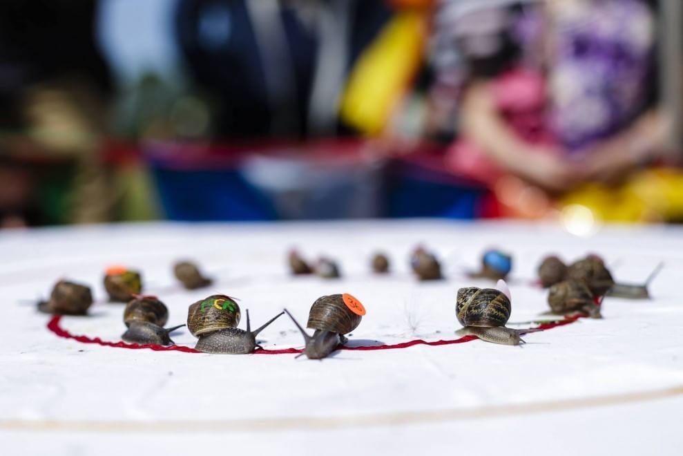 Corsa delle lumache, in Inghilterra il campionato mondiale
