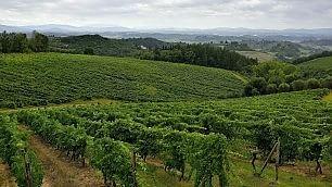Vacanze al profumo di vino