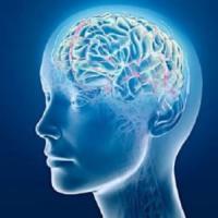 """La tecnica che accende i neuroni con un """"telecomando"""""""