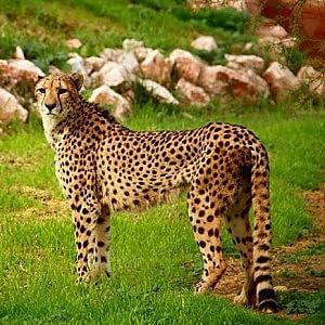 Zoo di Atene ko per i controlli ai capitali, a rischio il cibo per gli animali