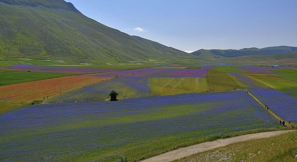 Foto . Umbria: Castelluccio, la Fiorita in blu