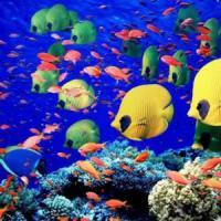 Pesci tropicali si adattano al clima che cambia diventando più piccoli