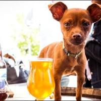 "Pausa caffè a ""sei zampe"", online la mappa dei locali pet friendly"