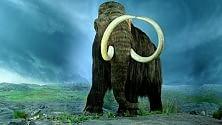 L'estinzione dei mammut? Colpa del troppo caldo