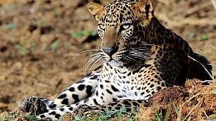 Ft . Yala, tra aquile e leopardi
