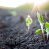 Il suolo fertile è in pericolo: ne perdiamo 24 miliardi di tonnellate l'anno