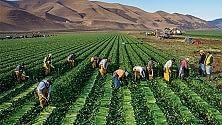 Suolo fertile, persi 24 mld di tonnellate l'anno