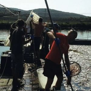 La strage di pesci a Orbetello: così il clima devasta la natura