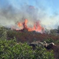 Incendi in Gallura: fuga da case e hotel verso le spiagge