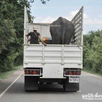 Thailandia, storia a lieto fine: le elefantesse tornano in libertà