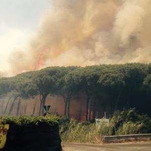 """Rogo a Fiumicino, la Forestale: """"Tre focolai appiccati da più mani"""""""