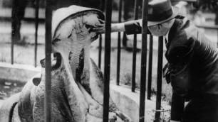 Veterinari, i migliori amici  degli animali: le foto d'epoca
