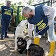Canile abusivo infestato  da topi: recuperati 51 cani