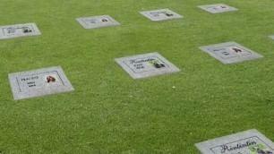 Dal cane al pesciolino rosso Il cimitero degli animali domestici