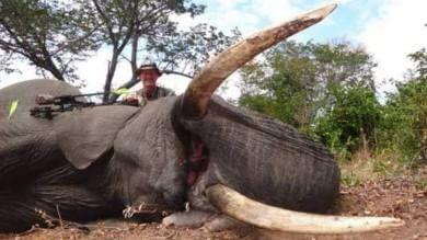 Zimbabwe accusa medico americano  per l'uccisione di un altro leone nei parchi
