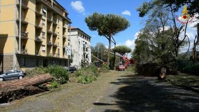 Nubifragio Firenze, danni a scuole   video   e impianti, distrutto parco dell'Anconella