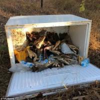 Australia, 75 teste di coccodrillo scoperte in frigorifero: sono di specie protetta