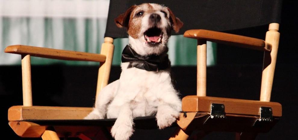 """Addio a Uggie, il cagnolino premio Oscar per """"The Artist"""""""