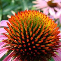 Dall'aglio alla menta piperita, le piante medicinali più usate