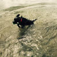 In vacanza con gli animali: le foto dei lettori / 14