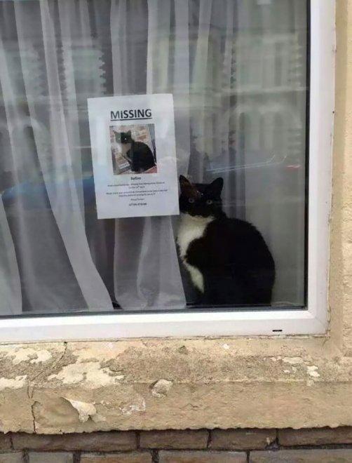 Il gatto che scompare e riappare vicino al volantino che ne denuncia la fuga