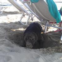 In vacanza con gli animali: le foto dei lettori / 24