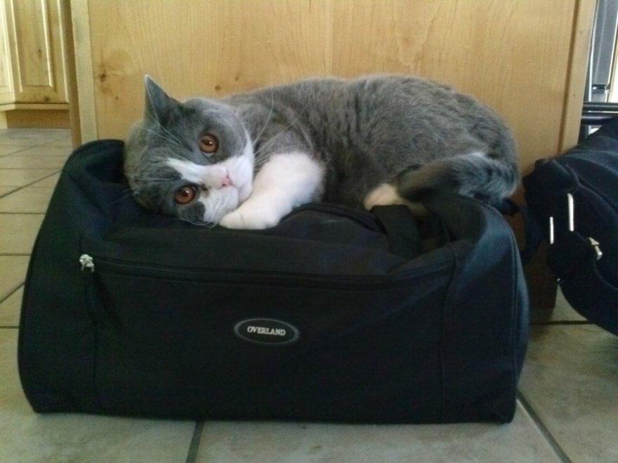 """""""Portami con te"""". Cani e gatti, la valigia è un incubo"""