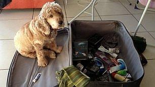 Ti prego, portami via con te Cani, gatti e l'incubo valigia