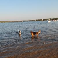 In vacanza con gli animali: le foto dei lettori / 31