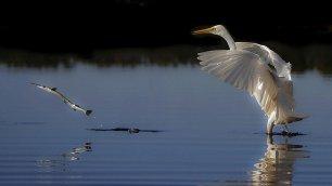 Natura selvaggia: le foto premiate dal Nature Conservancy Australia