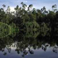 Per ogni abitante della Terra ci sono 422 alberi, molto più di quanto si pensasse