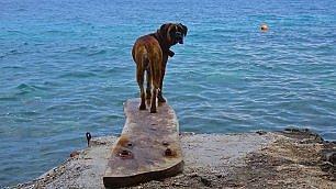 Dal mare alla montagna In vacanza con gli animali      Tutte le foto dei lettori  /  Invia