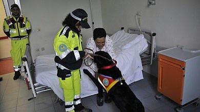 Animali, rivoluzione in corsia: a Treviglio  cani, gatti e conigli entrano in ospedale